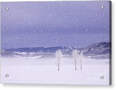 Acrylic Print featuring the photograph Flurry Trio by Kristal Kraft