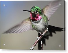 Acrylic Print featuring the photograph Fluttering by Shane Bechler