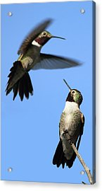 Fluttering Acrylic Print by Shane Bechler