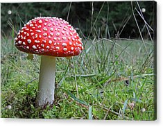 Fly Agaric In The Grass Acrylic Print by John Topman