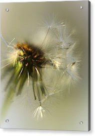 Fly Away Acrylic Print by Camille Lopez