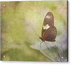 Fly Away Acrylic Print by David and Carol Kelly