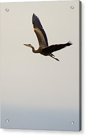 Acrylic Print featuring the photograph Fly Away by Erin Kohlenberg