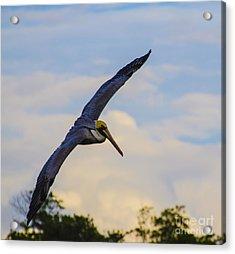Fly Away Acrylic Print by Judy Wolinsky