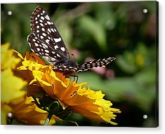 Acrylic Print featuring the photograph Fly Away by Julia Hassett