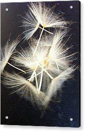 Fly Away Acrylic Print by Stephanie Aarons