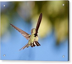 Fly Away With Me Acrylic Print