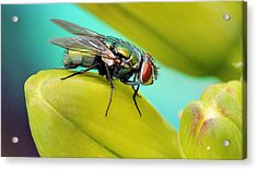 Acrylic Print featuring the photograph Fly By by Cathy Donohoue