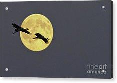 Moonlight Flight Acrylic Print