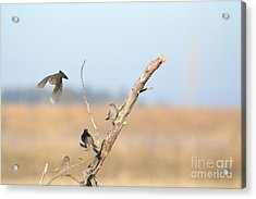 Fly Bye Acrylic Print by Laurianna Taylor