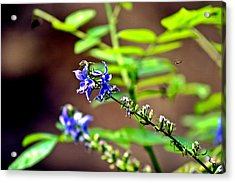 Fly Flower Acrylic Print by Mark Russell