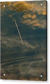 Fly High Acrylic Print by Sean Holmquist