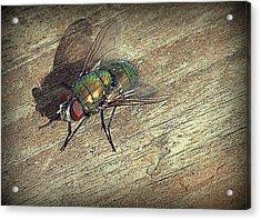 Fly Impressions Acrylic Print
