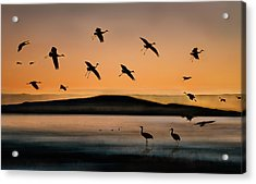 Fly-in At Sunset Acrylic Print