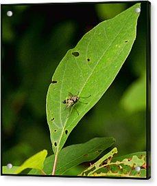 Fly On Leaf Acrylic Print