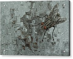 Fly On The Wall Acrylic Print by Jack Zulli