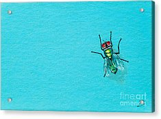 Fly On The Wall Acrylic Print by Stefanie Forck