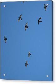 Fly Through The Sky's Ceiling Acrylic Print