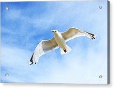 Fly With Me... Acrylic Print by Katy Mei