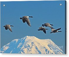 Flyby Acrylic Print
