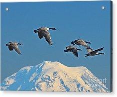 Flyby Acrylic Print by Jack Moskovita