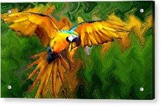 Flying 2 Acrylic Print by Bruce Iorio