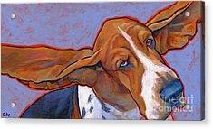 Flying Basset Hound Acrylic Print by Lynn Culp