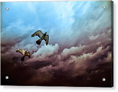Flying Before The Storm Acrylic Print