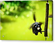 Flying Burin Acrylic Print by Suradej Chuephanich