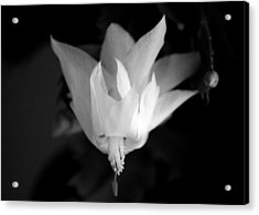 Acrylic Print featuring the photograph Flying Cactus by Silke Brubaker