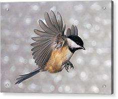 Flying Chickadee Acrylic Print