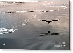 Flying Close To The Ground Acrylic Print by Gregory Dyer