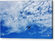 Flying Acrylic Print by Craig Wood