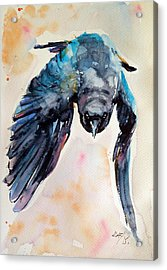 Flying Crow Acrylic Print