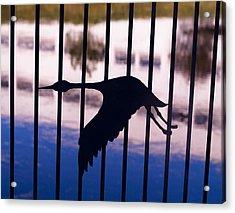 Flying Fence Acrylic Print by Tara Lynn