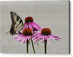 Flying Flower Acrylic Print