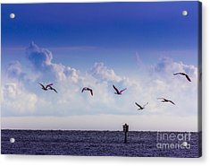 Flying Free Acrylic Print by Marvin Spates