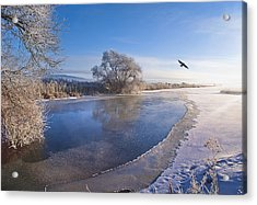 Flying Free On A Winter's Day Acrylic Print