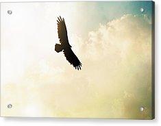 Flying High Acrylic Print by Chastity Hoff