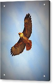 Acrylic Print featuring the photograph Flying High by Rima Biswas