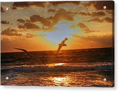 Acrylic Print featuring the photograph Flying In The Sun by Dennis Baswell