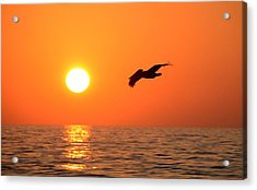 Flying Into The Sun Acrylic Print by David Lee Thompson