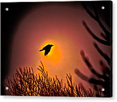 Flying - Leif Sohlman Acrylic Print