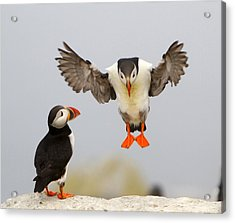 Flying Lessons Acrylic Print by PMG Images