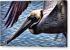 Flying Low 2 Acrylic Print
