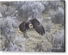 Flying Low Acrylic Print by Mike  Dawson
