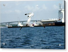 Flying Low Acrylic Print by Thomas Fouch