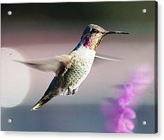 Flying Acrylic Print by Meeli Sonn
