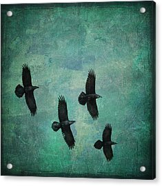 Acrylic Print featuring the photograph Flying Ravens by Peggy Collins