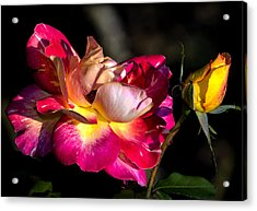 Flying Rose Acrylic Print